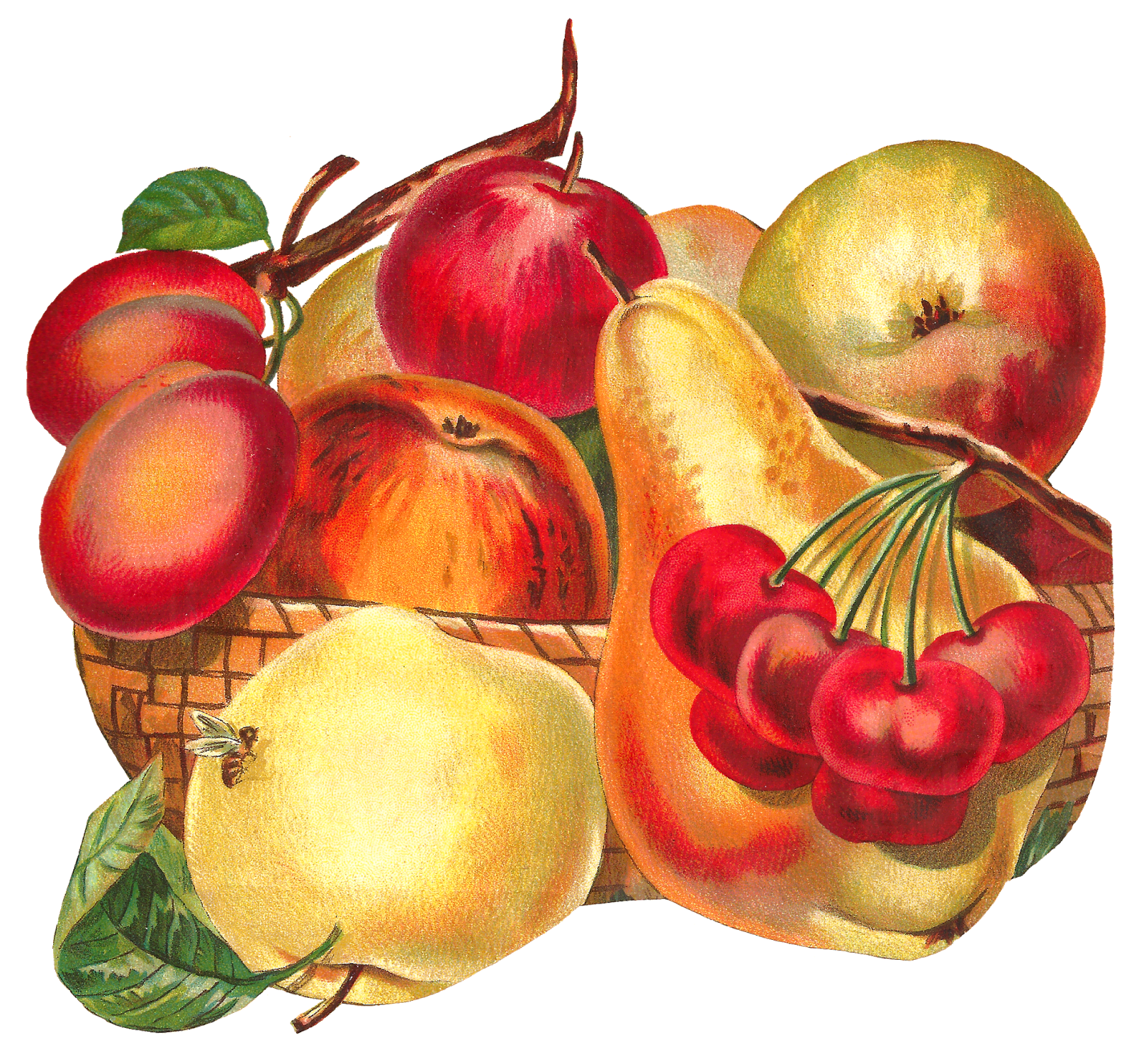 Clipart apple butter image library fruit-basket-image-apple-pear-plum-clipart-artwork-png.png (PNG-kuva ... image library