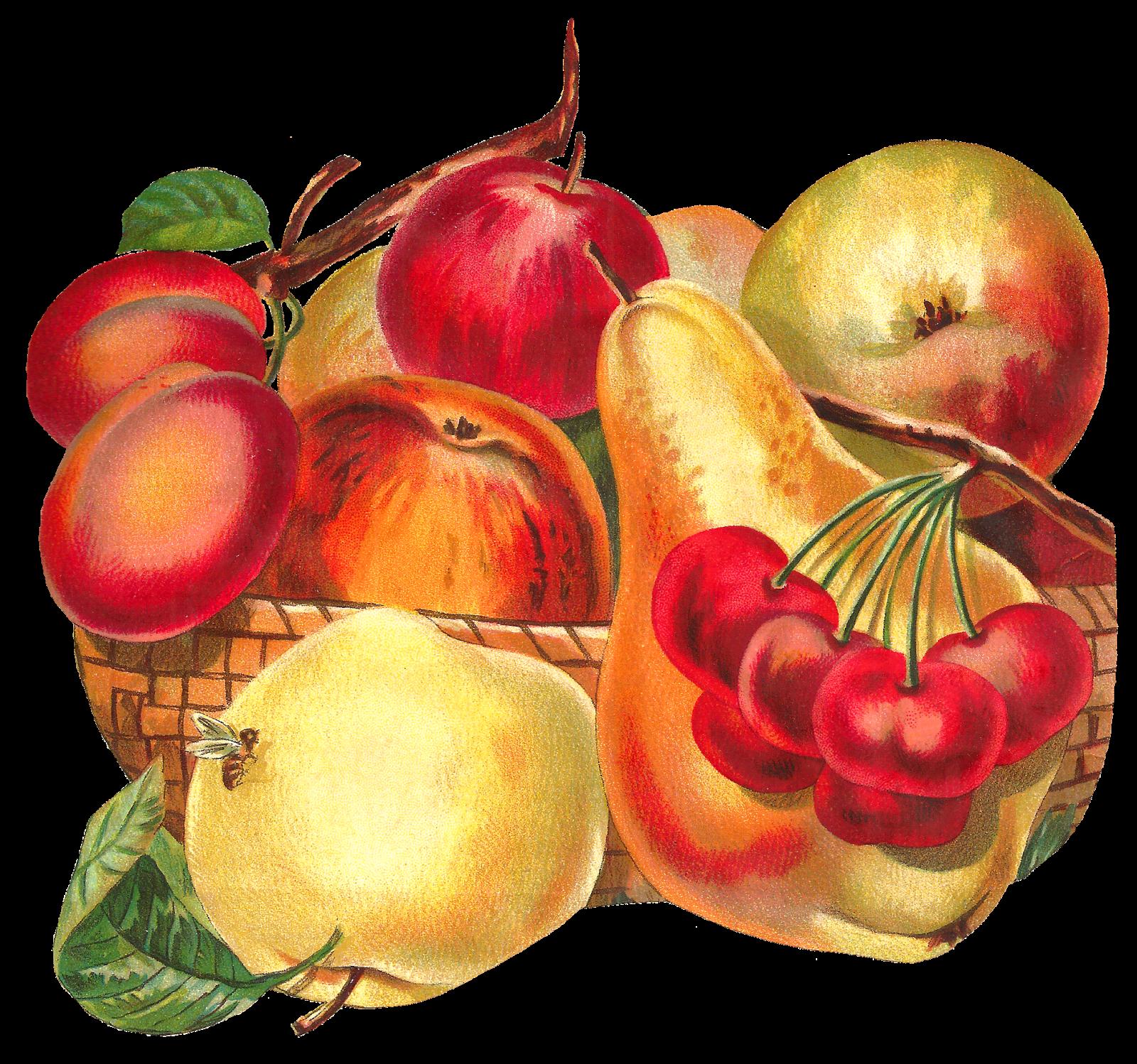 Apple and pear clipart image download Antique Images: Fruit Basket Botanical Artwork Digital Download ... image download