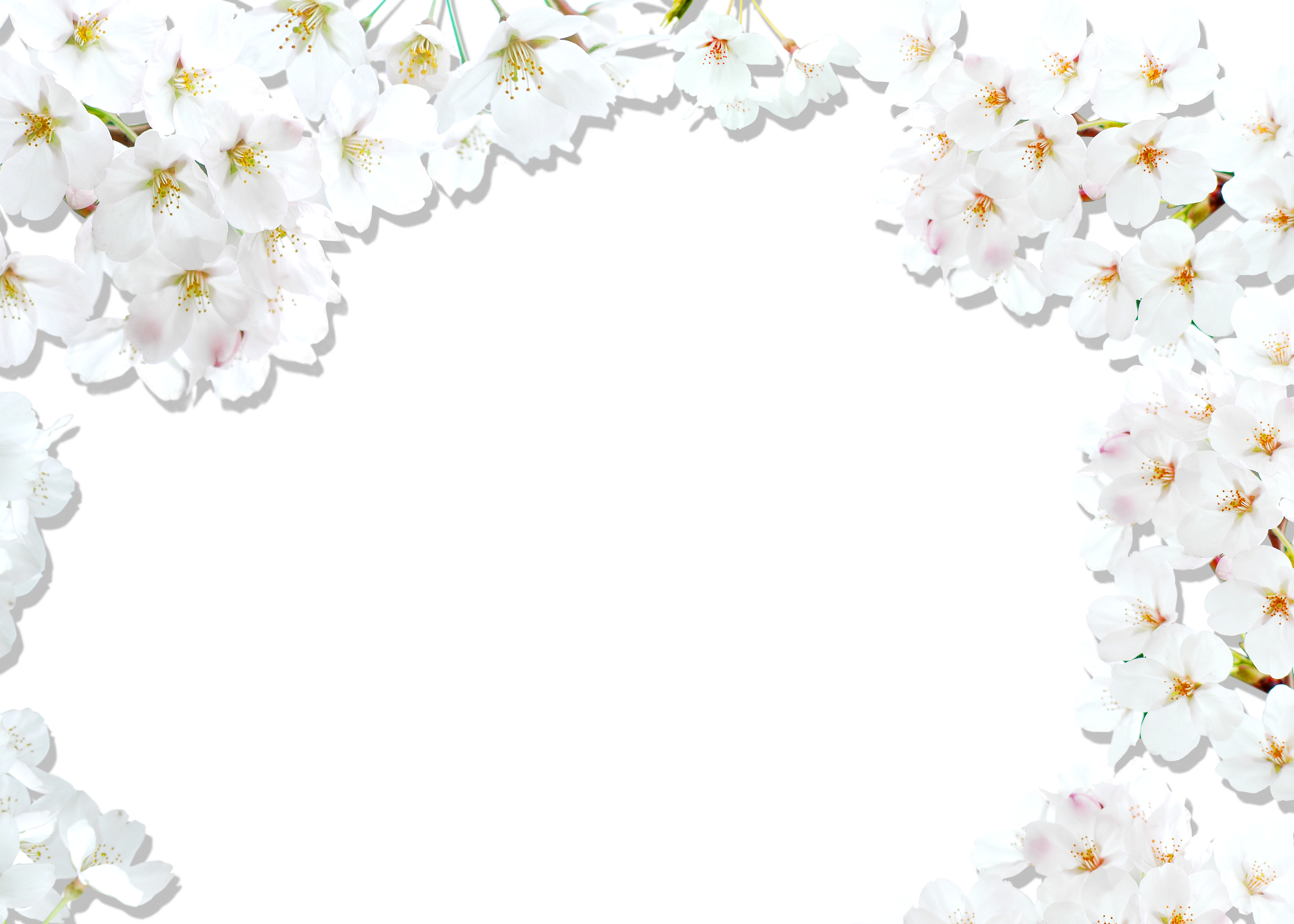 Apple blossom border clipart black and white vector library library National Cherry Blossom Festival White - Cherry border background ... vector library library