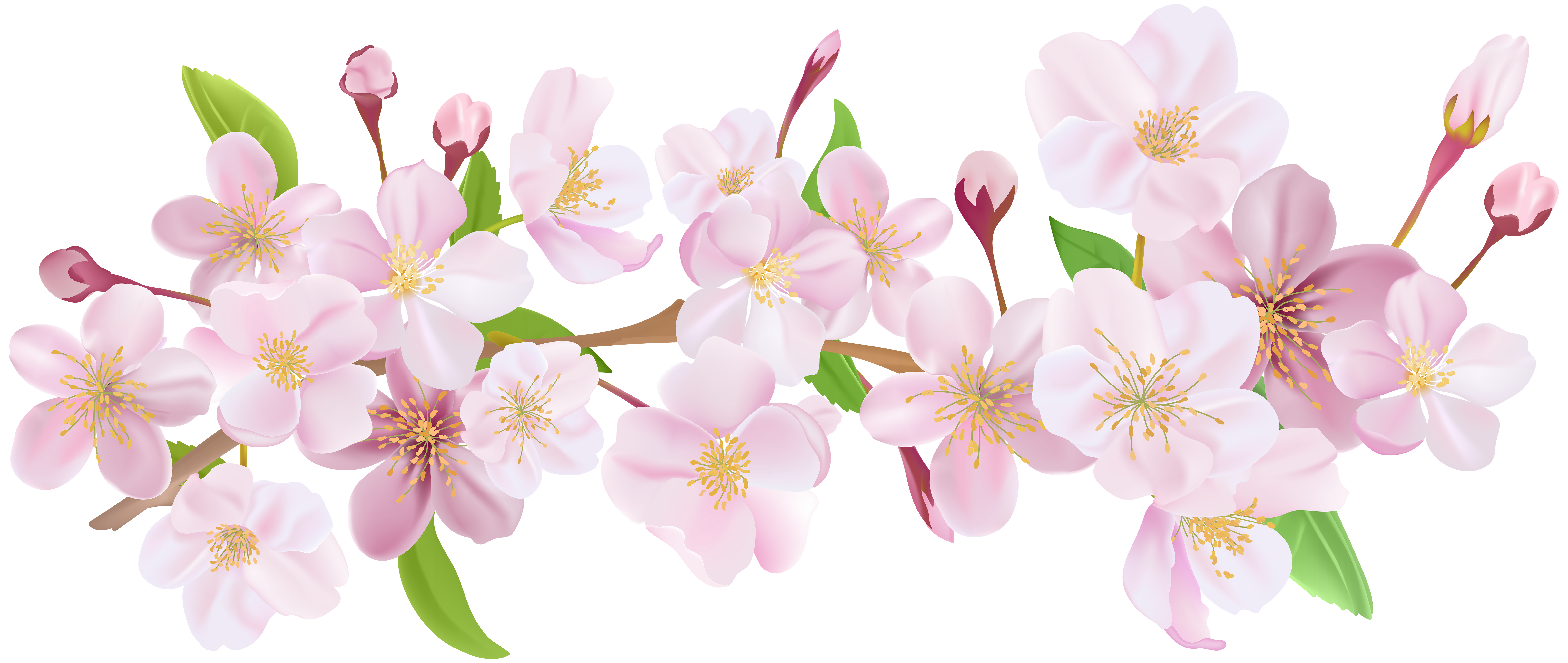 Flower blooming clipart clip royalty free Cherry Blossom Spring Branch PNG Clip Art | pretty pictures i can ... clip royalty free