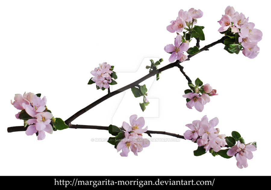 Apple blossoms clipart banner free download branch of apple blossoms by margarita-morrigan on DeviantArt banner free download