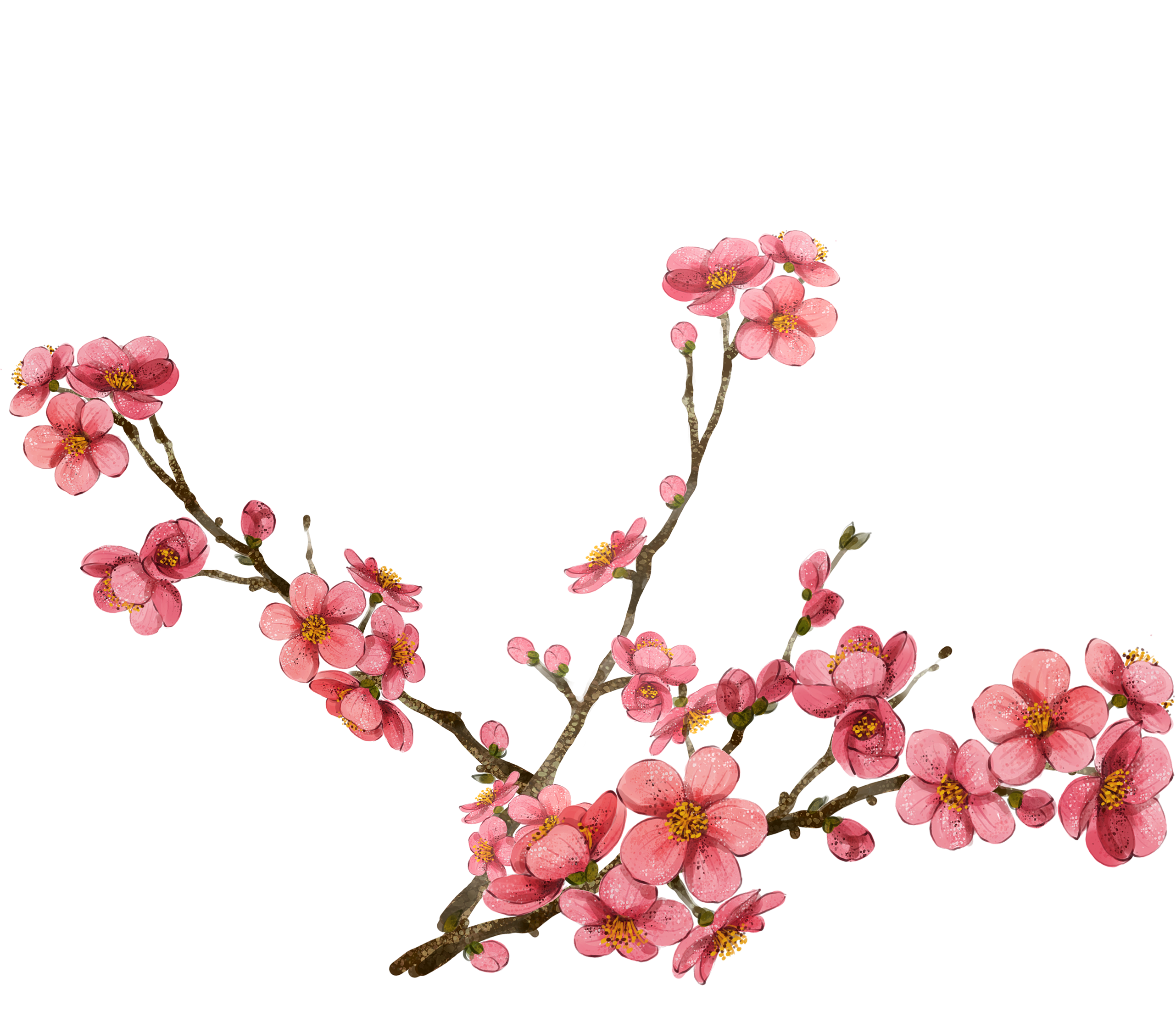 Cherry Blossom Clipart at GetDrawings.com | Free for personal use ... png black and white library