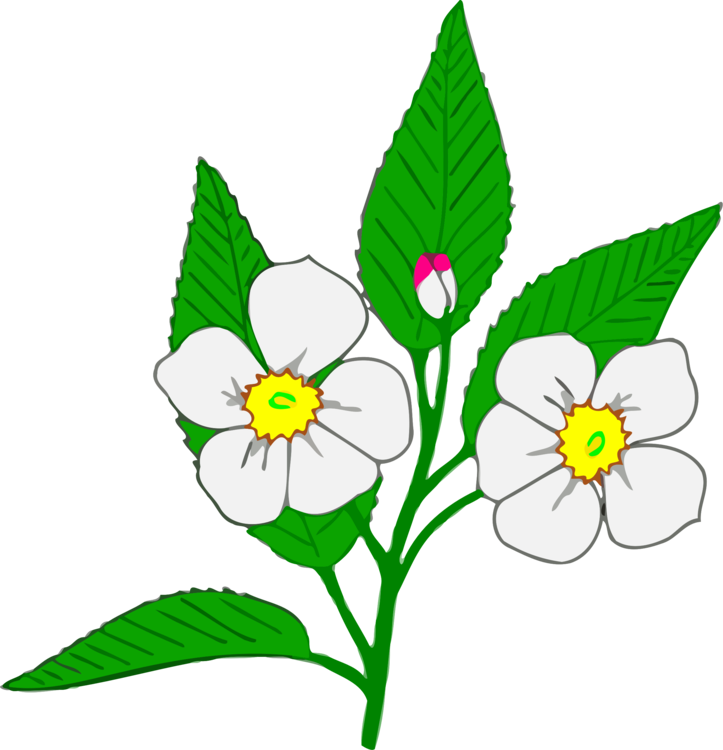 Apple drawnig clipart svg royalty free Blossom Flower Apple Can Stock Photo Drawing free commercial clipart ... svg royalty free