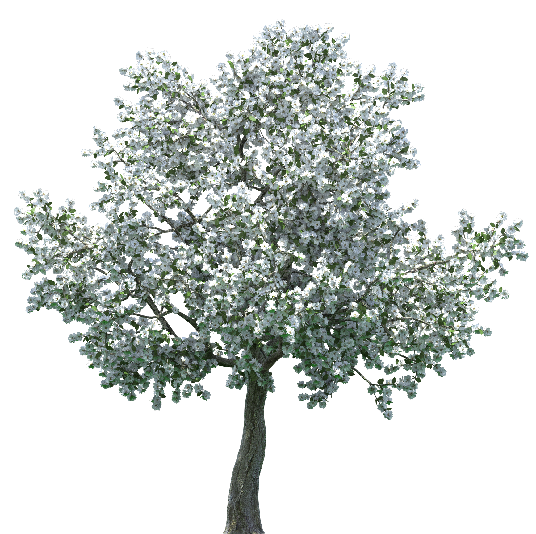 Orange tree clipart picture download Realistic Blossom Tree PNG Clip Art - Best WEB Clipart picture download