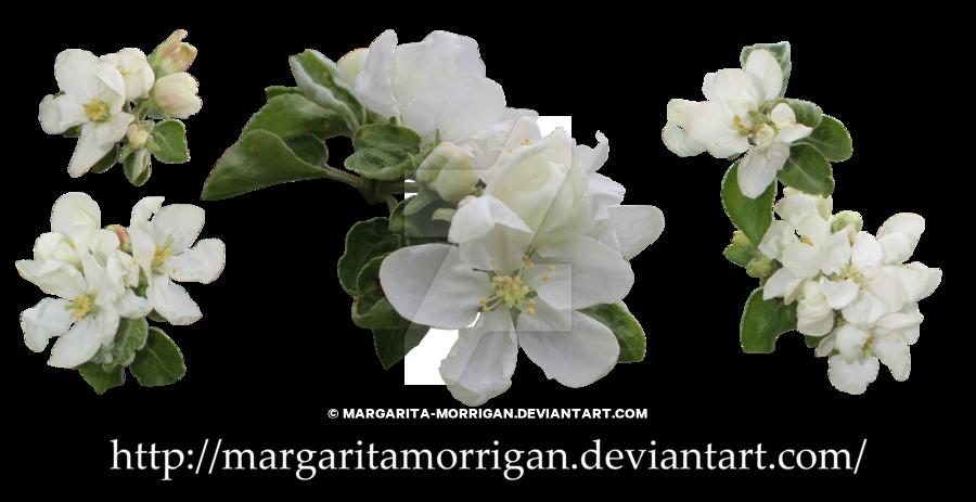 Apple blossom flower clipart svg black and white apple blossoms by margarita-morrigan on DeviantArt svg black and white