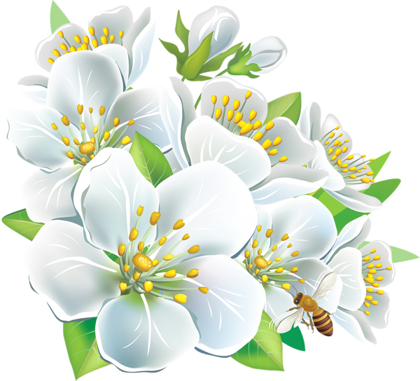 Apple blossom flower clipart transparent http://favata26.rssing.com/chan-13940080/all_p16.html | Deco-jabłoń ... transparent