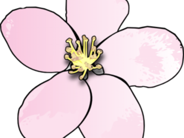 Apple blossom flower clipart image Cherry Blossom Clipart Free Download Clip Art - carwad.net image