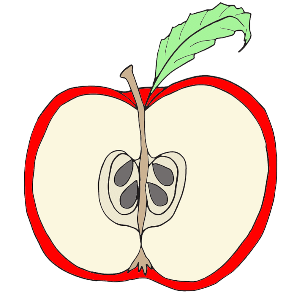 Apple stem and leaf clipart png freeuse library Parts of an Apple Clipart - Homeschool Clipart png freeuse library
