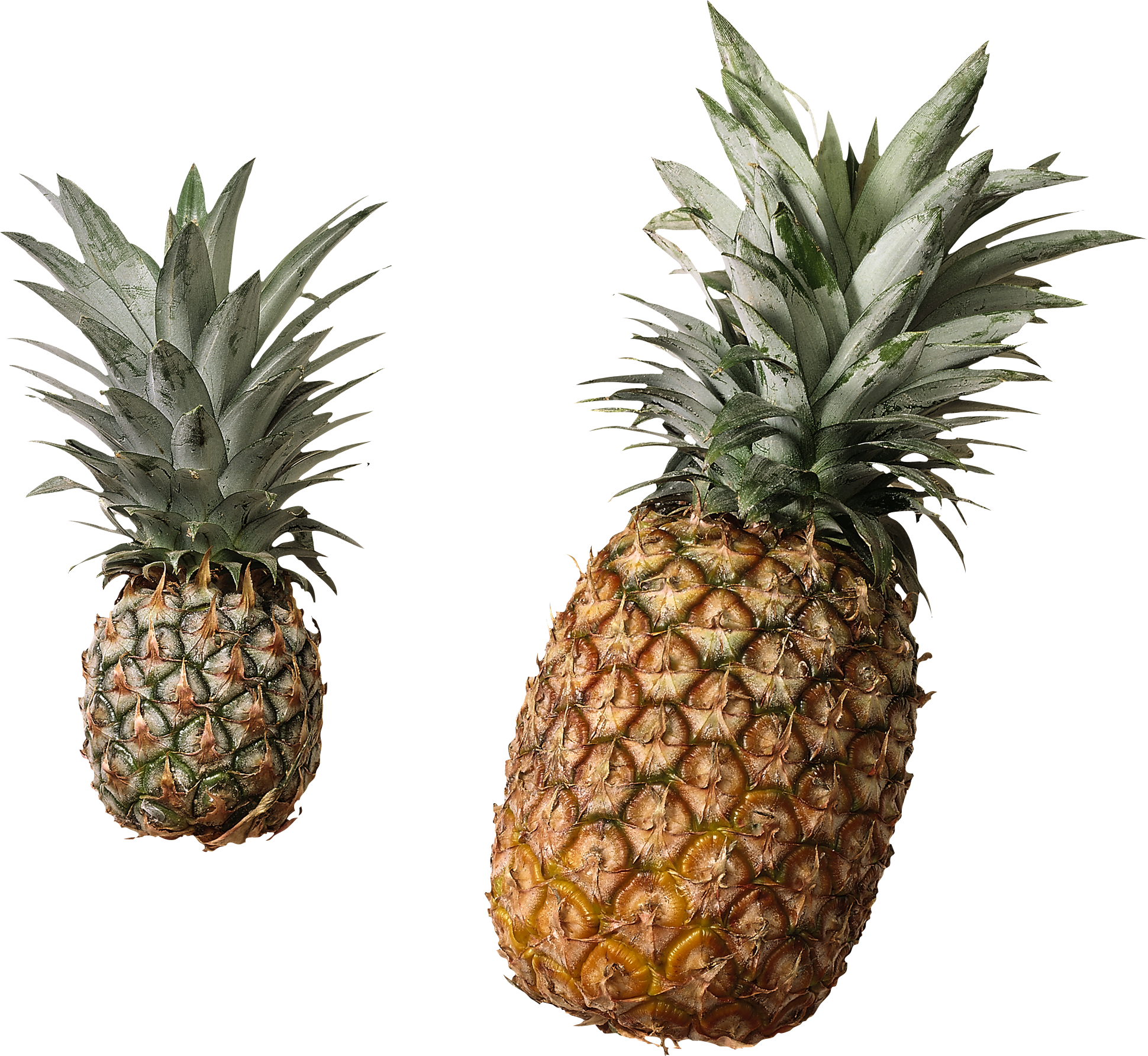 Apple clipart jpeg no background transparent stock Pinapples PNG Image - PurePNG | Free transparent CC0 PNG Image Library transparent stock