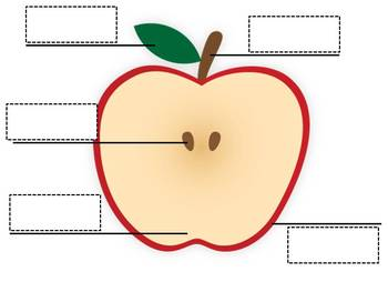 Apple clipart parts jpg freeuse stock Apple Parts Labels Worksheets & Teaching Resources   TpT jpg freeuse stock