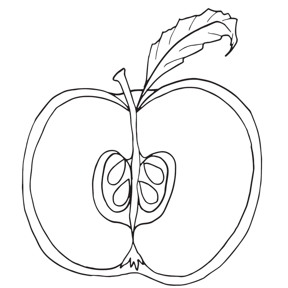 Apple clipart parts png black and white library Parts of an apple coloring pages, nomenclature cards, notebooking ... png black and white library