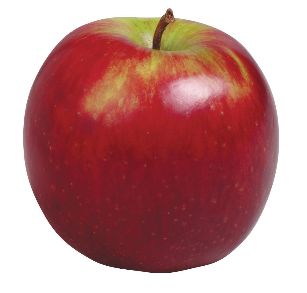 Apple clipart real svg transparent download Apple clipart real - ClipartFest svg transparent download