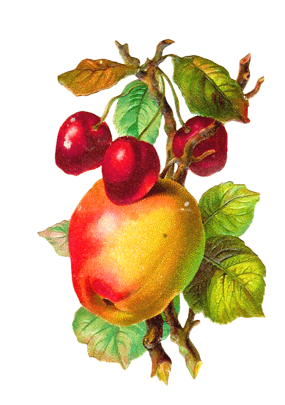 Apple clipart vintage vector freeuse Pin by Mary Barnes-Ekobena on Assorted Colored Clipart (Most are ... vector freeuse