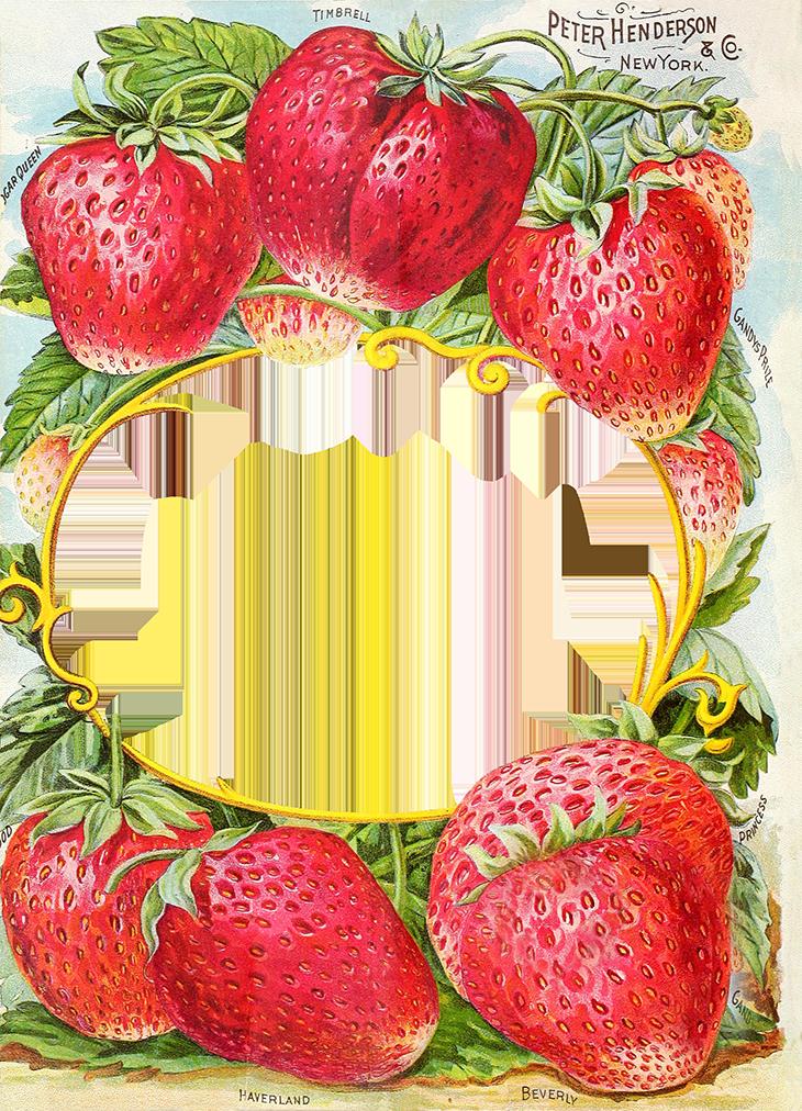 Apple farm clipart jpg free stock Antique Seed Catalog Reinvented – 1894 Henderson's Farm Frame ... jpg free stock