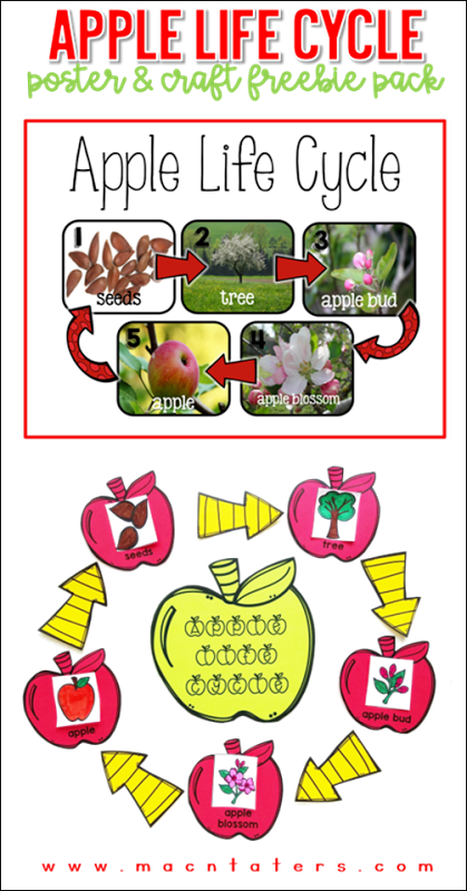 Apple science experiment clipart graphic freeuse Apple Life Cycle poster & activity free | Mac-n-Taters | Blog ... graphic freeuse