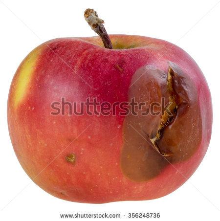 Apple orchard clipart rotten apple clip transparent Rotten Apple Stock Images, Royalty-Free Images & Vectors ... clip transparent