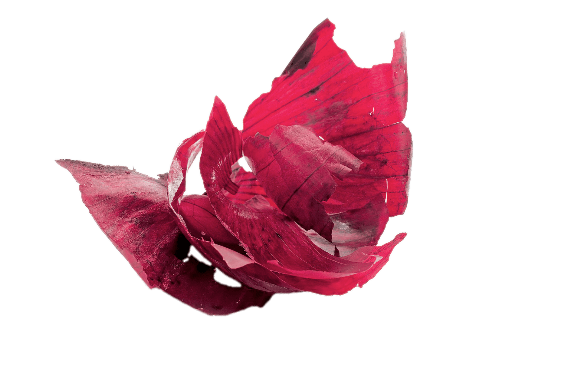 Apple peel clipart free download Red Onion Peels transparent PNG - StickPNG free download