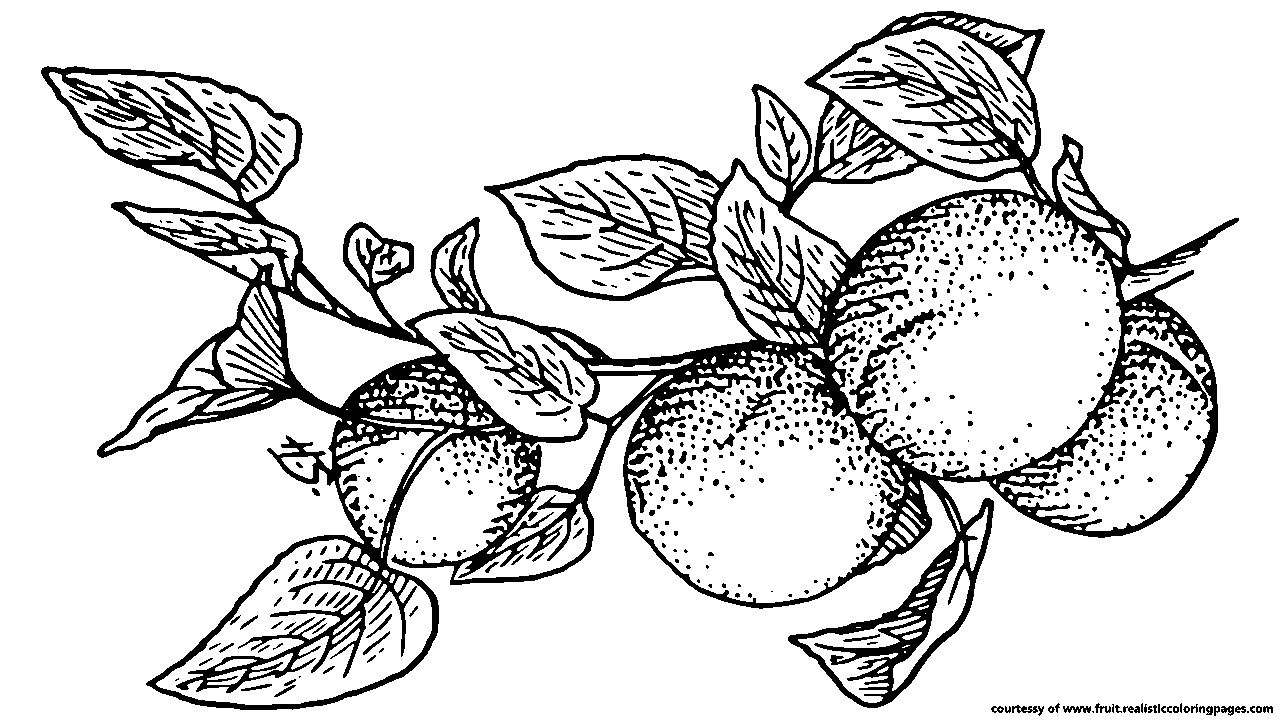 Apple picking clipart black and white banner library Downloads 7 Apricot Royalty Free Clipart - Fruit Names A-Z With Pictures banner library
