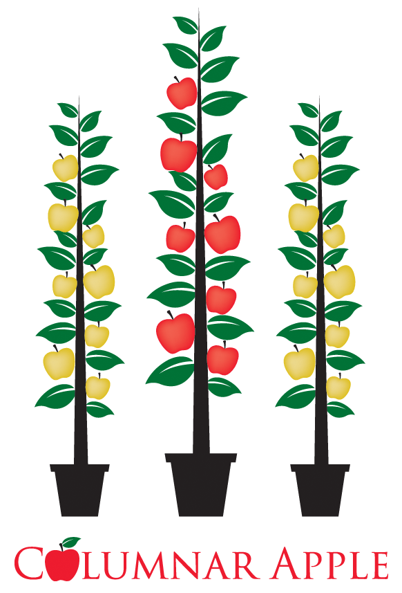 Apple tree root clipart picture free library Columnar Apples - PlantNet® picture free library