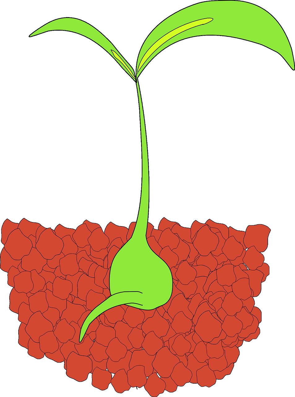 Apple seedling clipart png freeuse Virginians can begin ordering tree seedlings October 2 png freeuse