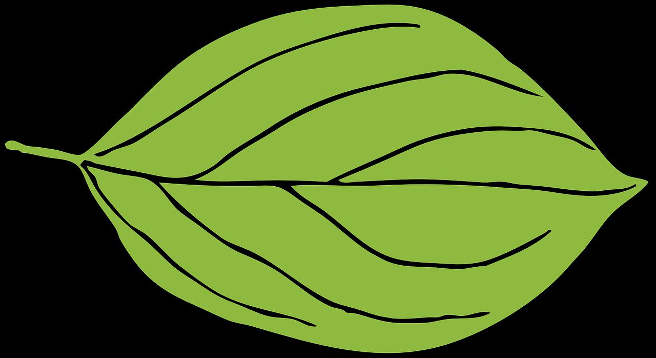Apple shape clipart svg free Apple Leaf Green Oval Shape transparent image | Apple | Pinterest ... svg free