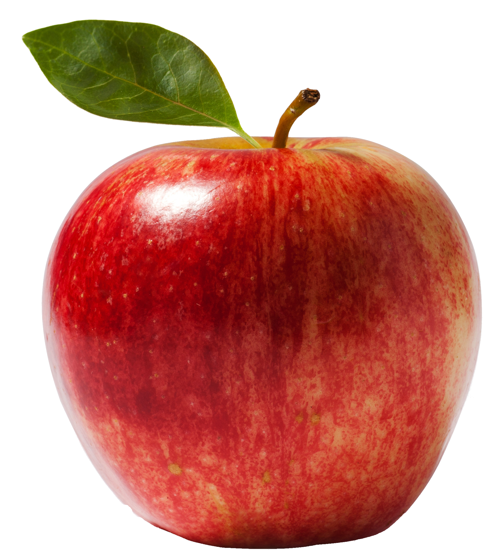 Apple sprout clipart picture free Plant Cells on emaze picture free