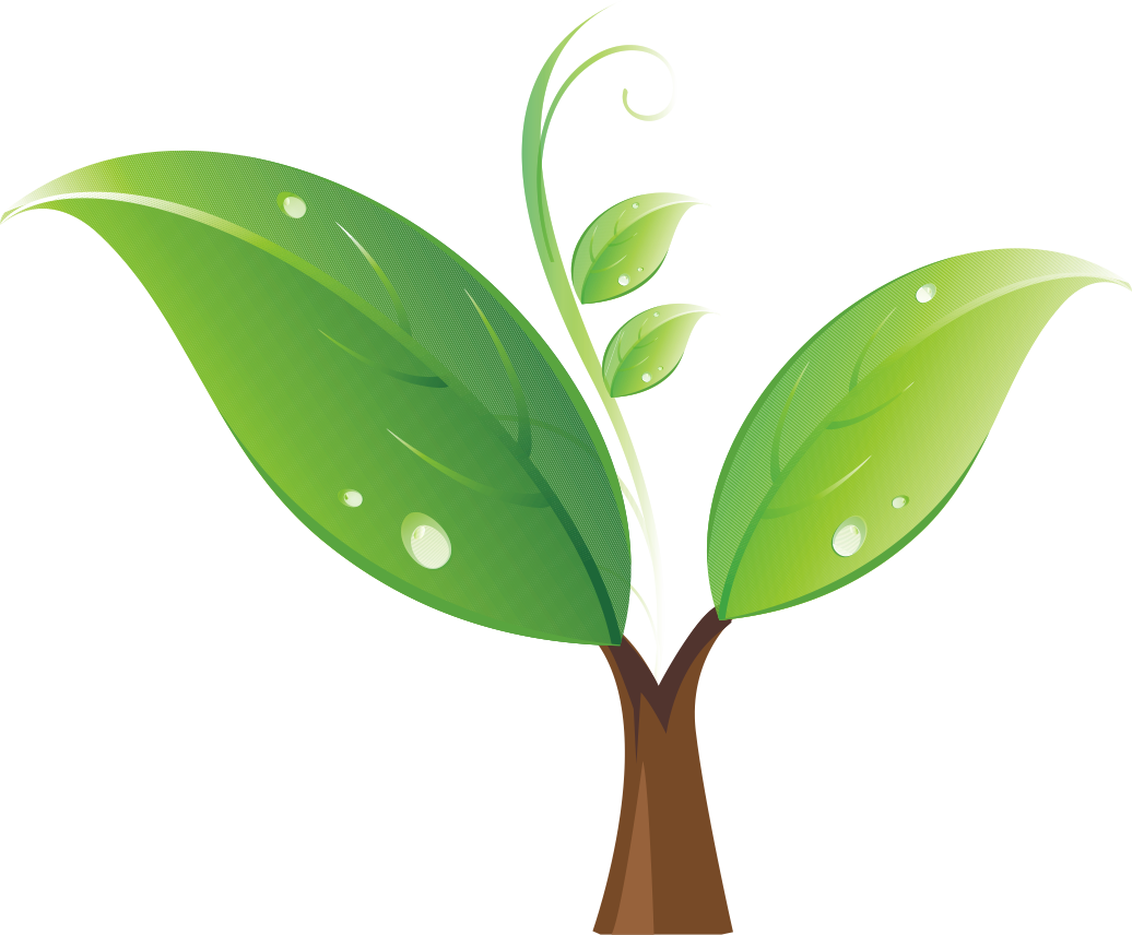 Tree sprout clipart image royalty free Seedling Tree Clip art - Green sprout 1036*856 transprent Png Free ... image royalty free