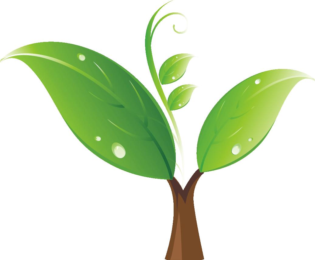 Tree seedling clipart clip art transparent Seedling Tree Clip art - Green sprout 1036*856 transprent Png Free ... clip art transparent
