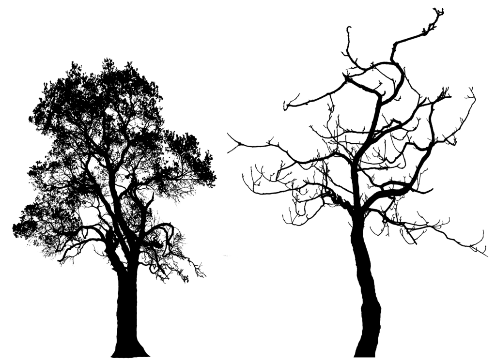 Dead Oak Tree Drawing at GetDrawings.com | Free for personal use ... png free library