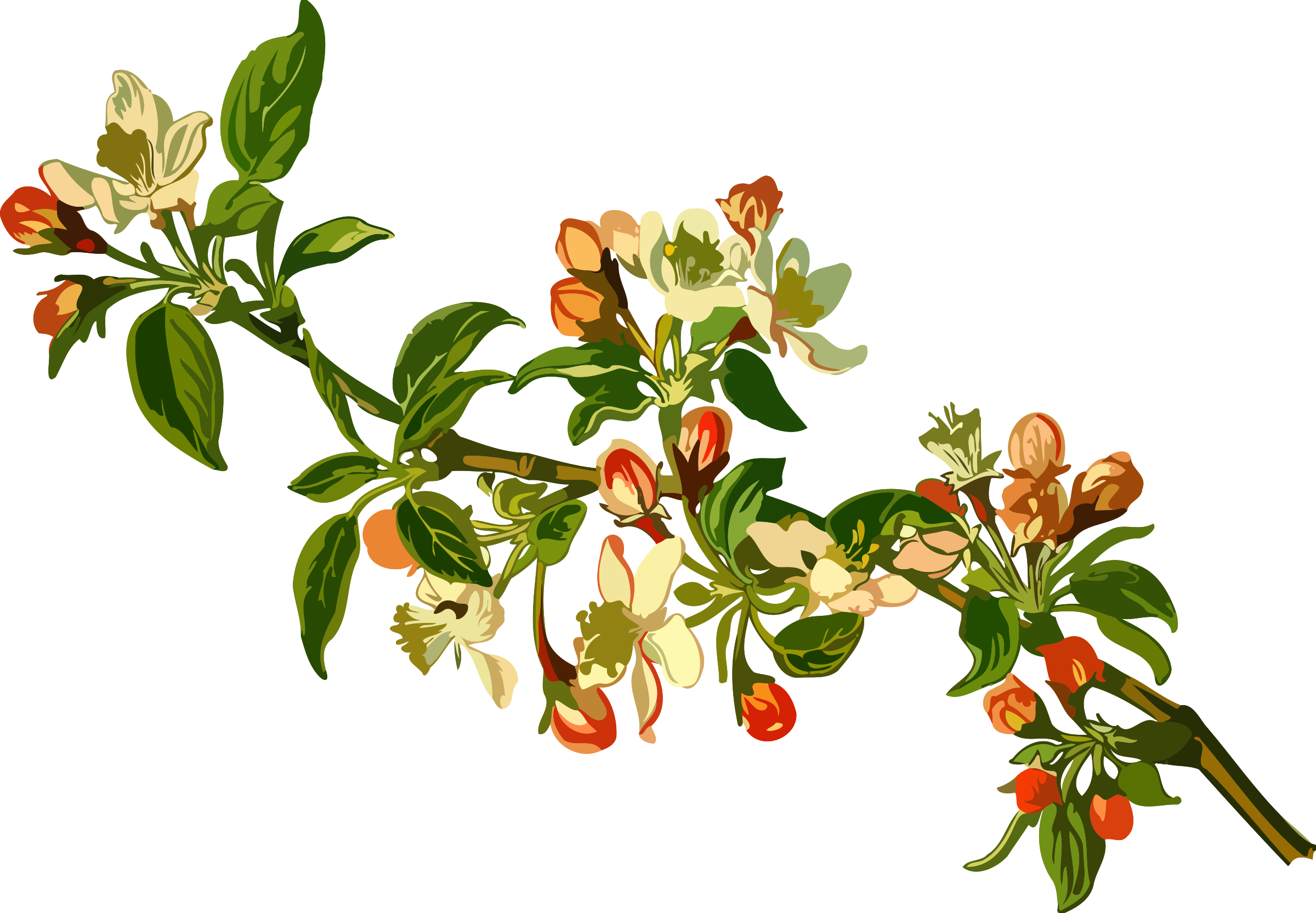 Apple tree flowers clipart graphic library library Clipart - Apple tree (low resolution) graphic library library