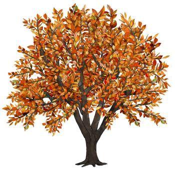 Apple and orange tree clipart vector library Clip Art Seasons of an Apple Tree   Design Creative   Apple tree ... vector library