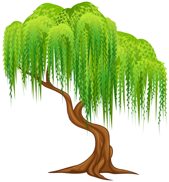 Transparent background tree clipart picture transparent Willow Tree Transparent PNG Clip Art Image | Summer clip | Pinterest ... picture transparent