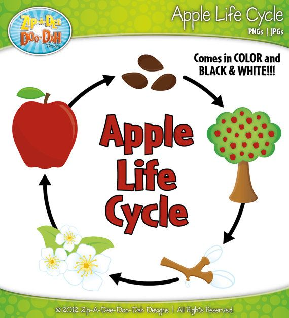 best images about. Apple tree cycle clipart