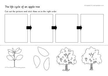 Apple tree cycle clipart. Life sequencing sheets sb