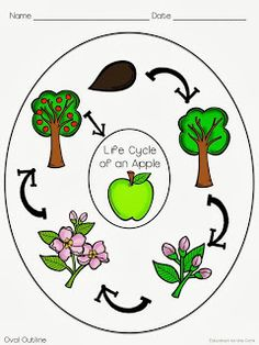 Apple tree cycle clipart. Life of a plant