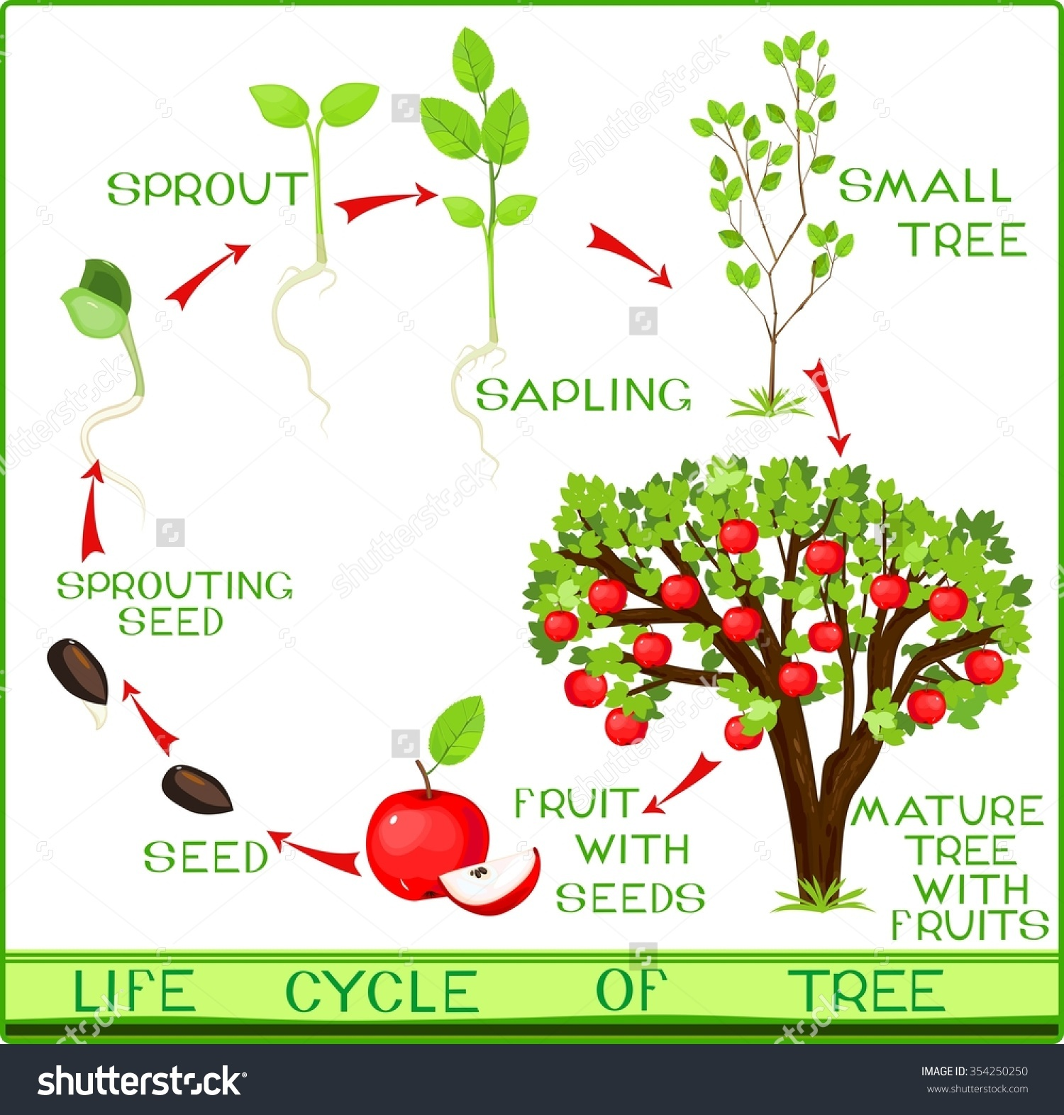 Apple tree cycle clipart. Clipartfest save to a