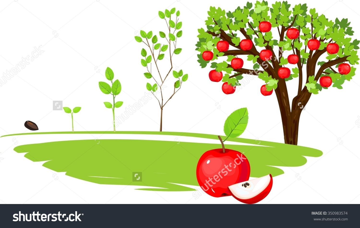Apple tree cycle clipart svg freeuse library Life Cycle Apple Tree Stock Illustration 350983574 - Shutterstock svg freeuse library