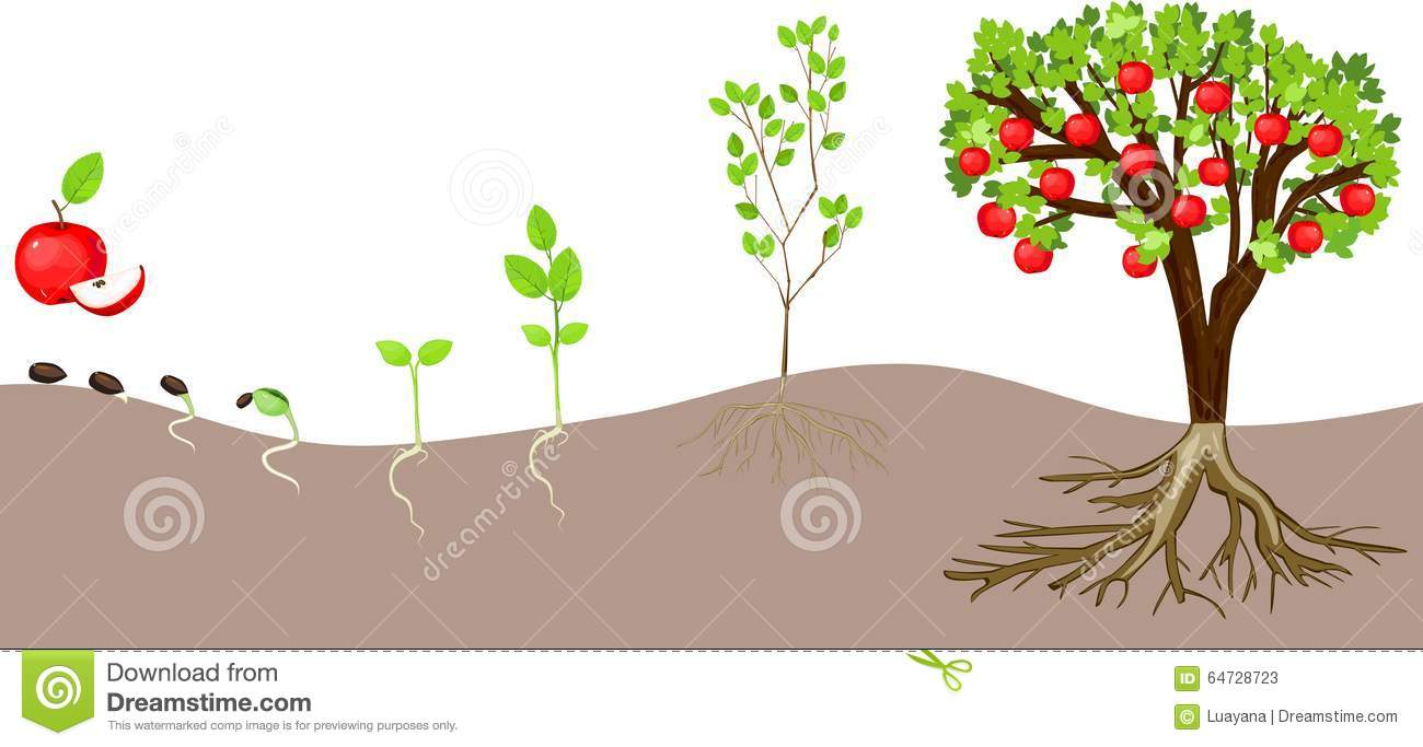 Apple tree cycle clipart. Clipartfox life of
