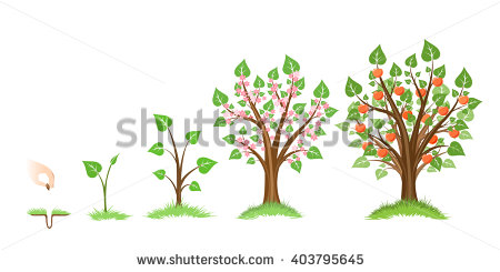 Clipartfox growth. Apple tree cycle clipart