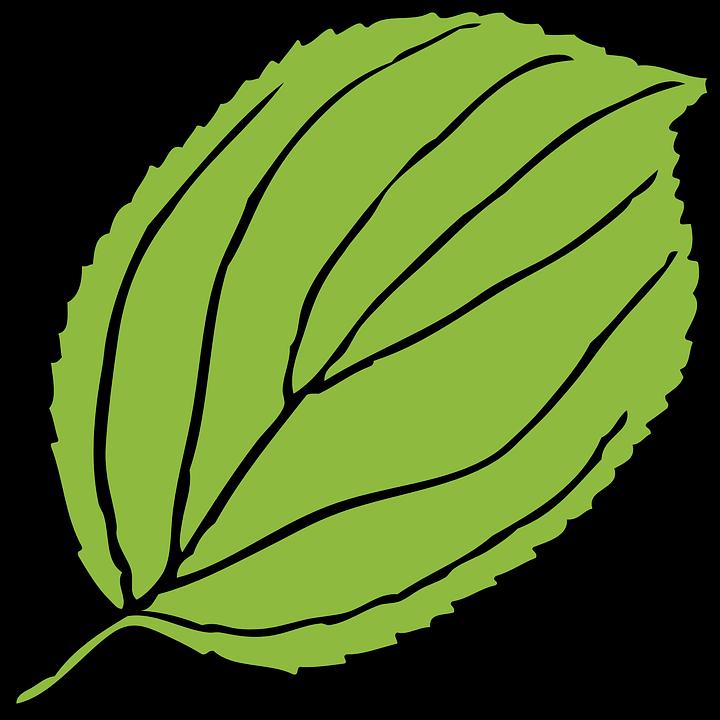 Apple tree leaf clipart clipart transparent Apple Leaf Green Serrate - 720*720 - Free Clipart Download ... clipart transparent