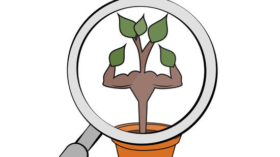 Apple tree sapling clipart clip free library How to Grow an Apple Tree from a Seed (with Pictures) - wikiHow clip free library