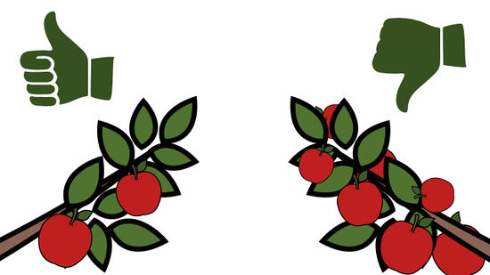 Apple tree sapling clipart jpg library download How to Grow an Apple Tree from a Seed (with Pictures) - wikiHow jpg library download