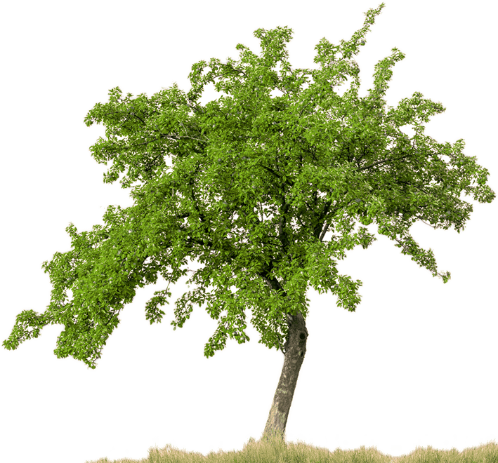 Apple trees background clipart png clip art black and white library Tree PNG Images - Free Icons and PNG Backgrounds clip art black and white library