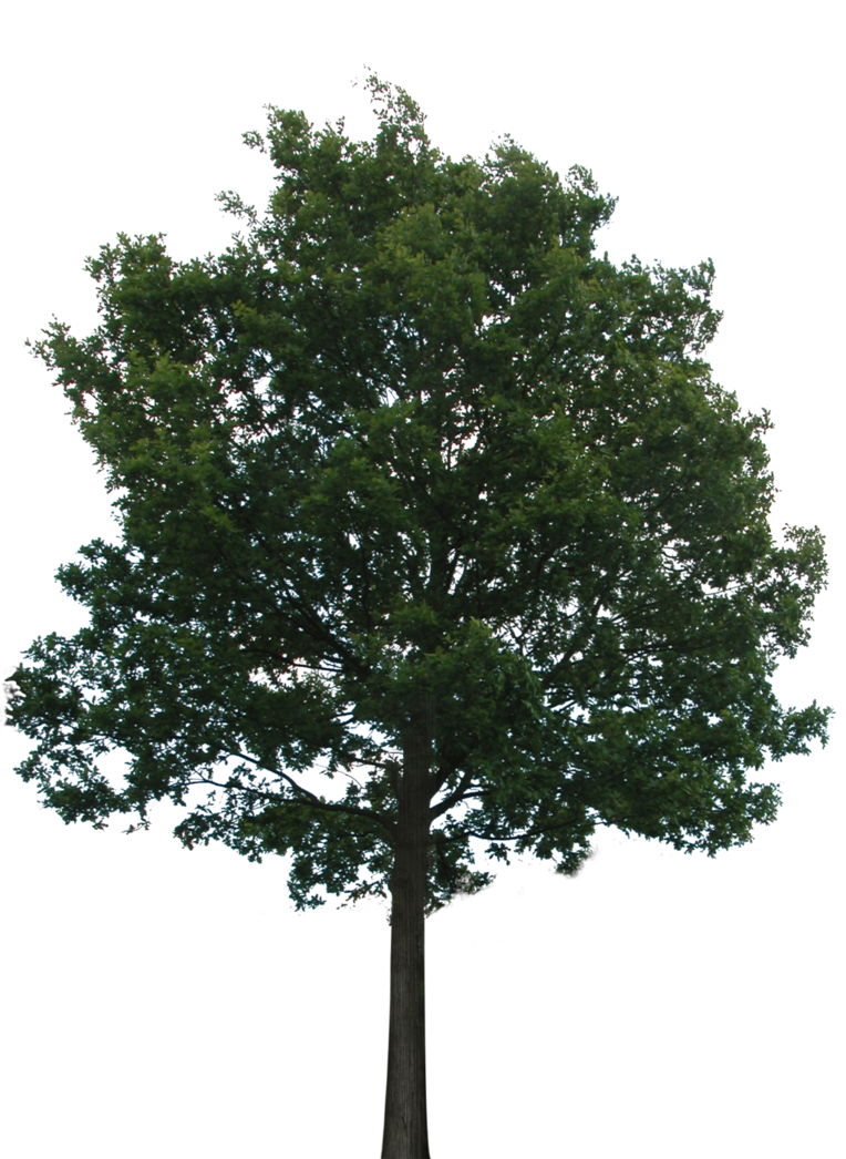 Apple trees background clipart png graphic stock Tree with transparent background. No roots so you'll want to hide ... graphic stock