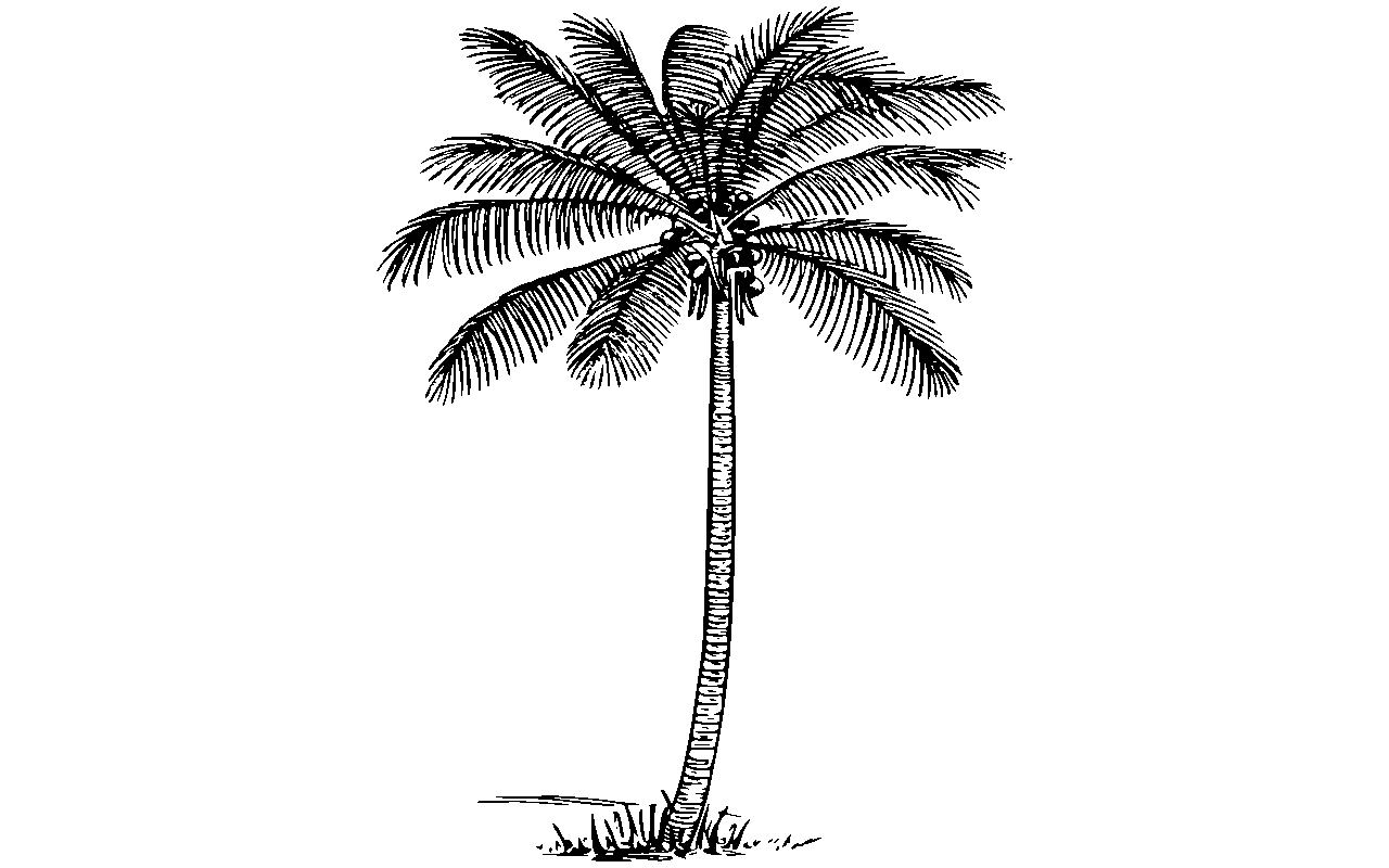 Coconut tree clipart black and white vector royalty free library Tree of life black and white clipart google search - Clipartable.com vector royalty free library