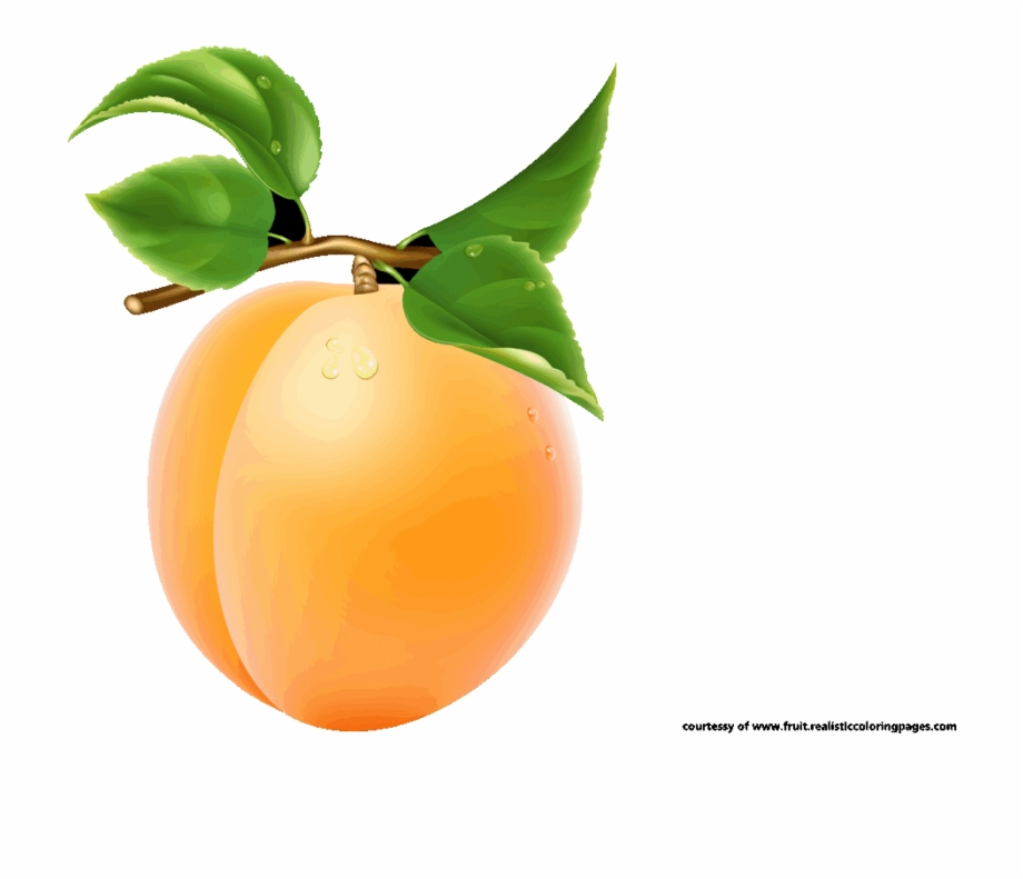 Clipart apricot image stock Single Apricot Transparent Image - Apricot Fruit Clipart Free PNG ... image stock