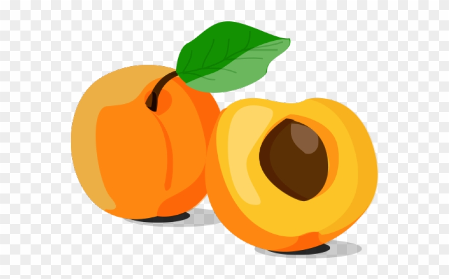 Clipart apricot image black and white Apricot Clipart Orange Fruit - Png Download (#2357587) - PinClipart image black and white