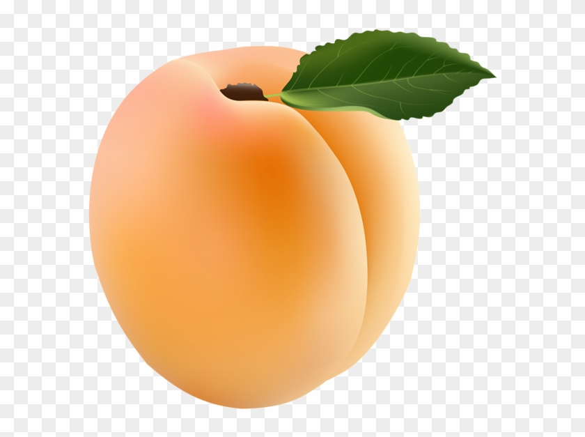 Apricot clipart png transparent stock Apricot Transparent Png Clip Art Image - Apricot Clipart, Png ... png transparent stock