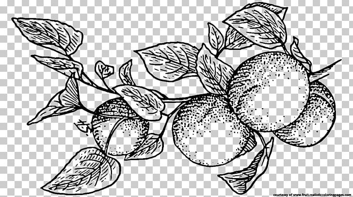 Apricot clipart black and white graphic free download Fruit Apricot Line Art PNG, Clipart, Apricot, Artwork, Berry, Black ... graphic free download