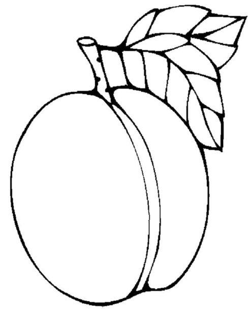Apricot clipart black and white clip art freeuse stock Apricot Clipart   Free download best Apricot Clipart on ClipArtMag.com clip art freeuse stock